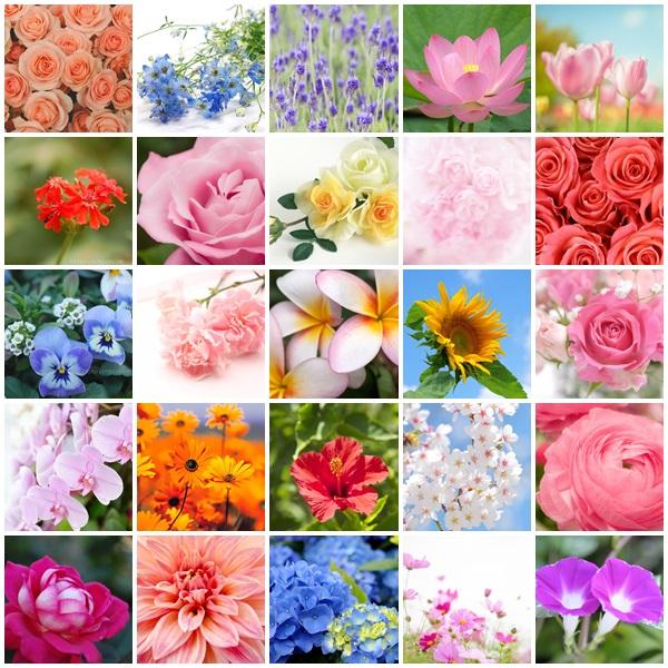 あなたはどんな花? 華花ブランディングコンサル 名古屋&東京 サンライト